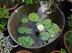 Zinkwanne Bepflanzen Und Als Pflanzk 252 Bel Oder Miniteich