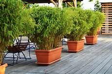 bambou de balcon 20 backyard privacy ideas for screening neighbours out