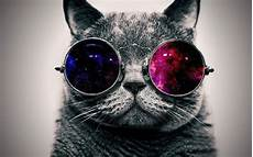Cool Cat Wallpapers