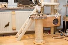 kratzs 228 ule f 252 r katzen selbst gebaut sisal