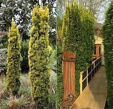 Deko Ideen Welche Pflanzen Als Sichtschutz F 252 R Garten Und