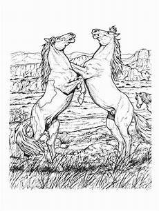 ausmalbilder pferde bild zwei pferde auf der wiese