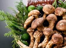 Inilah Jenis Jamur Yang Bisa Dimakan Beracun Yang