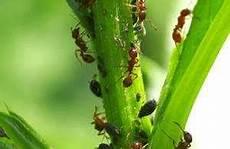 rote ameisen im rasen ameisen im rasen oder garten entdeckt ameisen im rasen