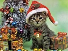 animal cat merry christmas event wallpaper for 10630 wallpaper high resolution wallarthd com