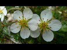frasi i fiori fiori di montagna