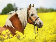 Schöne Pferde Bilder - more than 50 beautiful photographs decor10