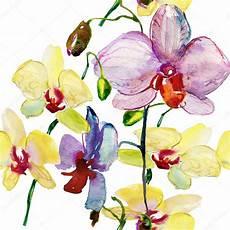 immagini fiori orchidee modello con fiori di orchidee foto stock 169 olies 47748539