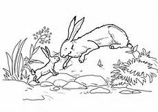 nutbrown hare and big nutbrown hare were by
