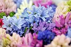 sfondo a fiori il giardino dei fiori segreti il baule d inchiostro