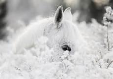 consalnet vliestapete 187 wei 223 es pferd im schnee 171 in