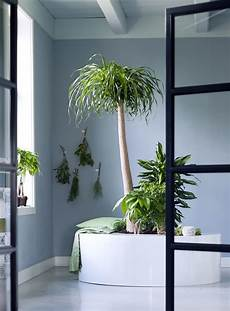 indoor trees are the houseplants for january the of