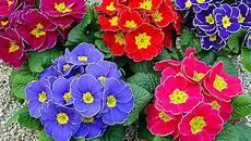 piante di fiori per un mondo verde le piante fiorite