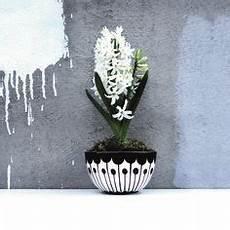 pflanzen günstig die 24 besten bilder vasen 220 bert 246 pfe vasen blumen
