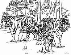 baby tiger coloring pages to and print for free