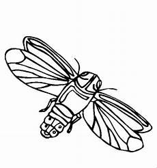 insekten 00224 gratis malvorlage in insekten tiere ausmalen