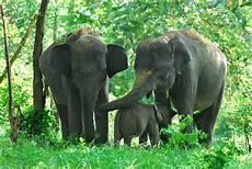 60 Gambar Hewan Gajah Badak Dan Jerapah Ayeey