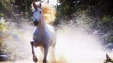 why don t we unicorns today this ballsy song of the sandman lullaby by enya unicorn