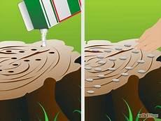 d 233 truire une souche d arbre detruire une souche comment