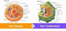 Struktur Sel Hewan Dan Tumbuhan Beserta Gambarnya