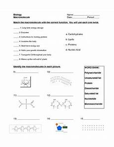 macromolecule worksheet by for the love of biology tpt
