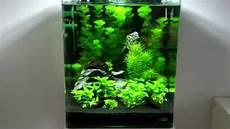nano aquarium 30l nano cube 30l