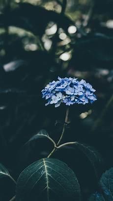 blue green flower wallpaper iphone lavender s blue rosemary s green