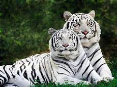 Haiwan Terancam Yang Berwarna Putih Permata Dunia
