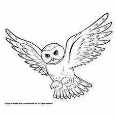 Ausmalbilder Schneeeule Die 136 Besten Bilder Harry Potter Harry