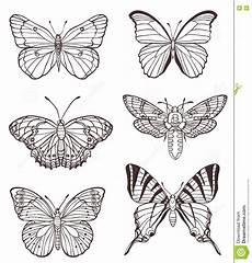 set of butterflies stock vector illustration