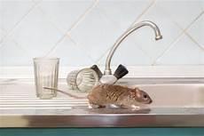 comment faire fuir les souris dans les murs comment faire fuir les souris dans les murs 10 rem 200 des