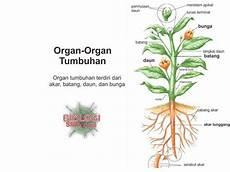 Organ Organ Tumbuhan Dunia Biologi