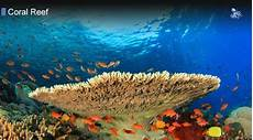 what forms the structure called a coral reef what forms the structure called a coral reef from blane peruns thesea coral