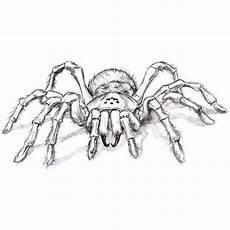 Malvorlagen Wolf Spider Malvorlagen Vogelspinne