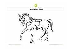 Malvorlage Pferd Mit Sattel Ausmalbilder Pferde Kostenlose Ausmalbilder