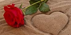 8000 Gambar Bunga Mawar Berduri Gratis Gambar Id