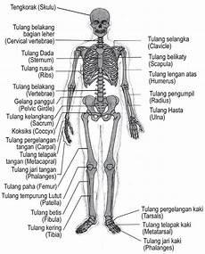 Struktur Dan Fungsi Rangka Manusia Jendela Dunia