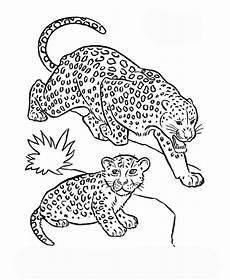 Ausmalbilder Leopard Ausdrucken Ausmalbilder F 252 R Kinder Leopard 3