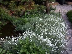 Nos Plantes Couvre Sol En Terrain Argileux Au Jardin De