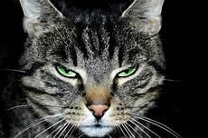 Katzenphobie Die Angst Vor Katzen Catplus De
