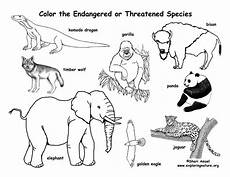endangered animals coloring pages 16966 endangered animals coloring page
