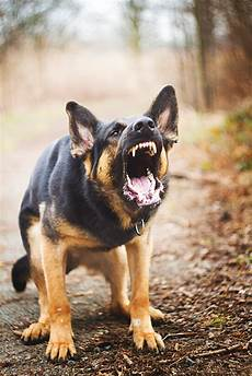 k9seiz can aggression be fixed in providence ri