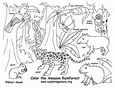 the rainforest historical state of the ecosystem