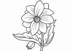 immagini di fiori da colorare e stare dibujos para colorear y pintar gratis