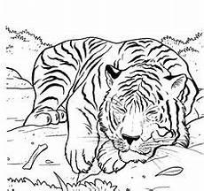die 209 besten bilder tiger kuchen tiger kuchen