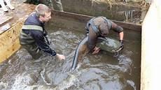 Das Ende Einer Einzigartigen Fischzucht Ein 100 Kilo