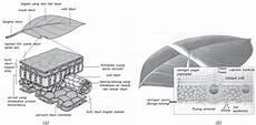 Struktur Anatomi Daun Dan Fungsi Daun Pada Tumbuhan Lengkap