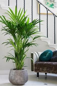 Zimmerpflanzen Für Gute Luft - die besten 25 wohnzimmer pflanzen ideen auf
