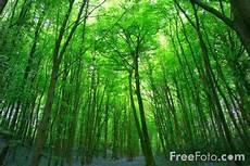 Gambar Hutan Pohon Kurus Tinggi Namun Sejuk 171 Juragan Cipir