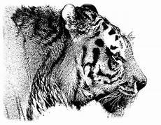 Coole Ausmalbilder Tiere Ausmalbilder Tiere Newsletter 2014 4 Malen Und